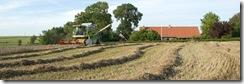 Sidste hvede foran gården